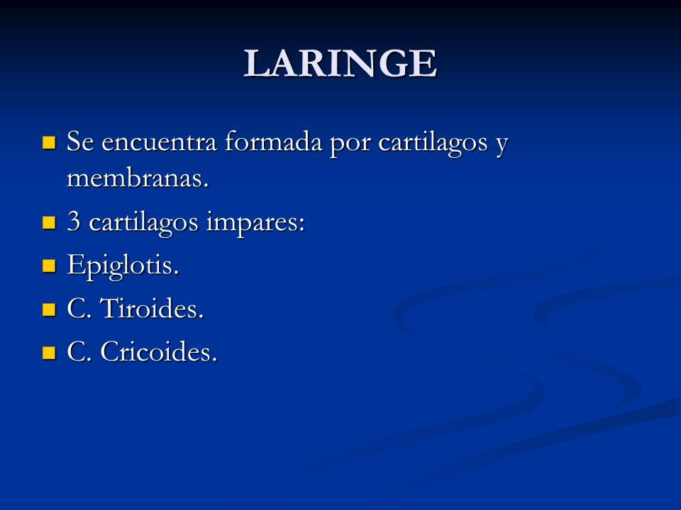 LARINGE Se encuentra formada por cartilagos y membranas.