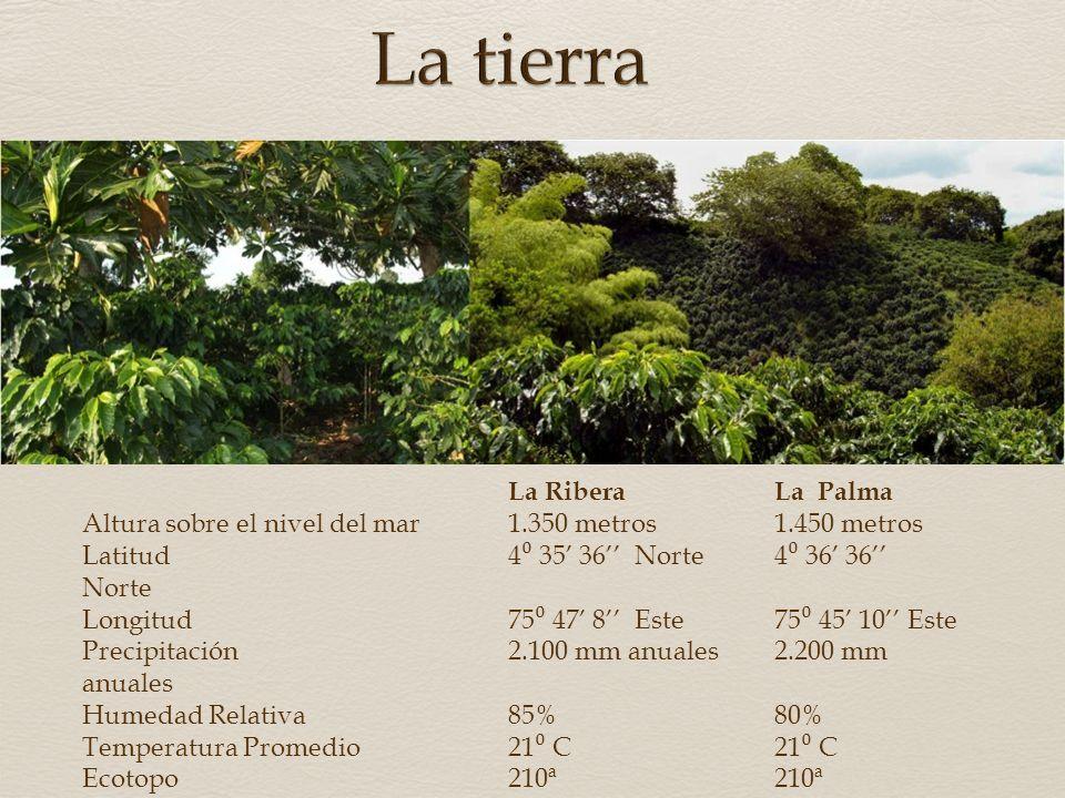 La tierra La Ribera La Palma