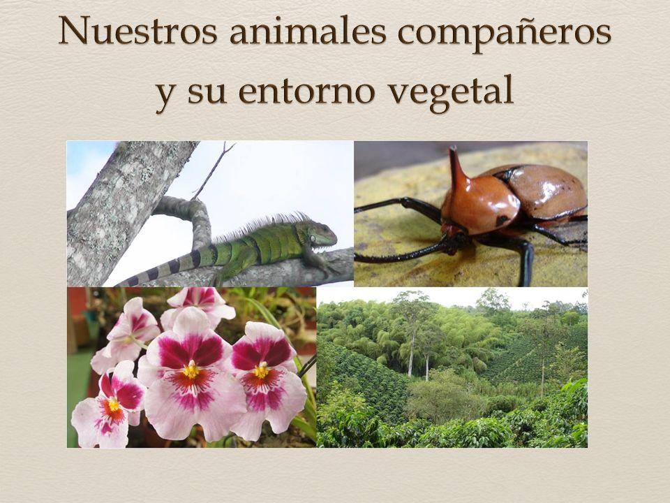 Nuestros animales compañeros y su entorno vegetal