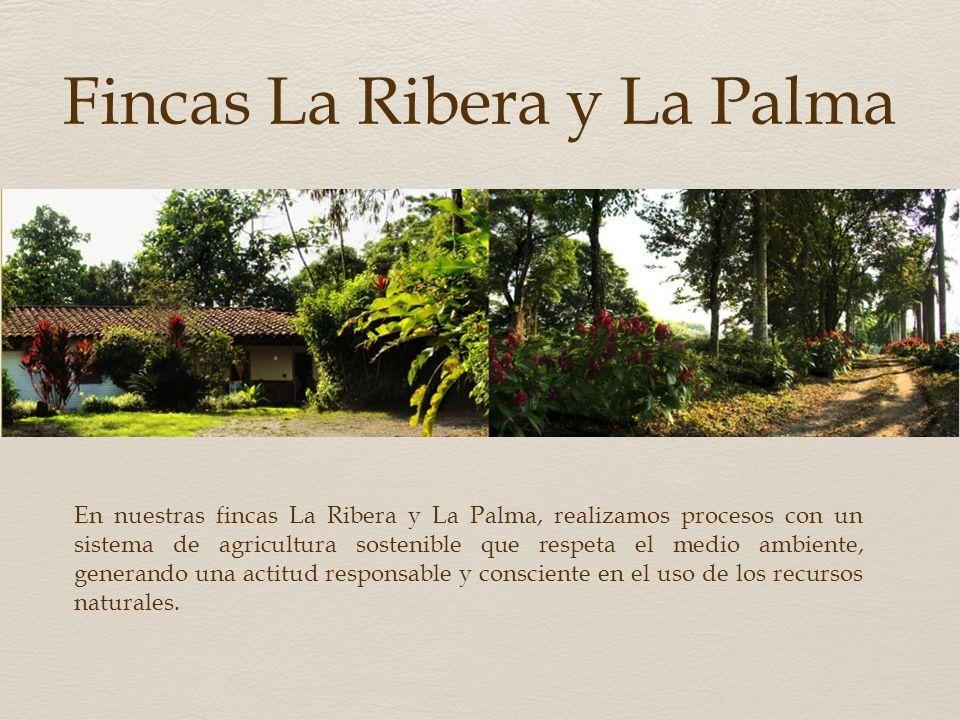 Fincas La Ribera y La Palma
