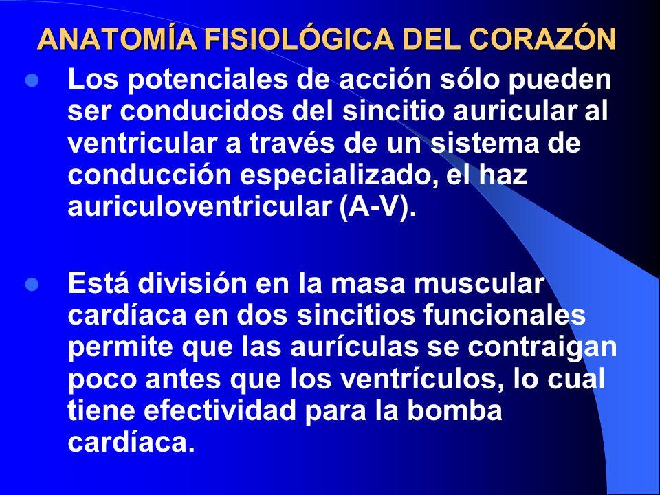 Magnífico Etiquetado Anatomía Y La Fisiología Del Corazón ...