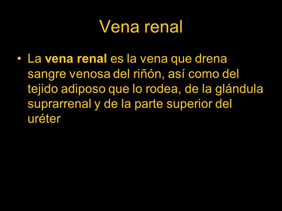 Vena renal