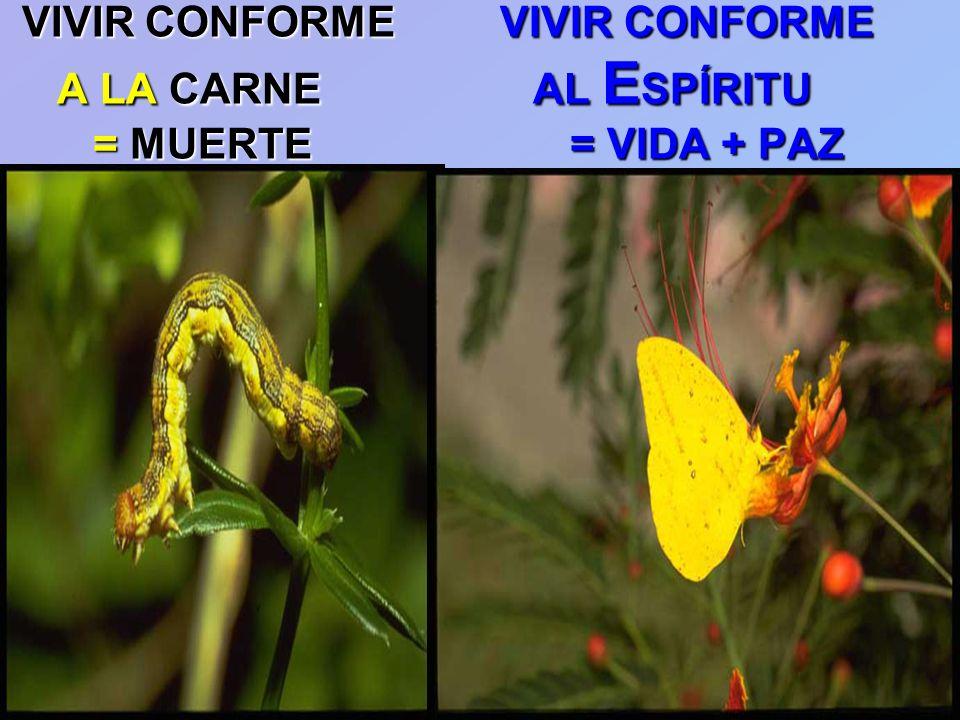 VIVIR CONFORME VIVIR CONFORME A LA CARNE AL ESPÍRITU = MUERTE = VIDA + PAZ