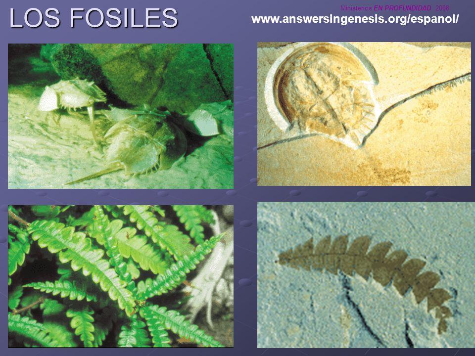 LOS FOSILES www.answersingenesis.org/espanol/