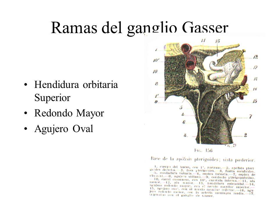 Ramas del ganglio Gasser