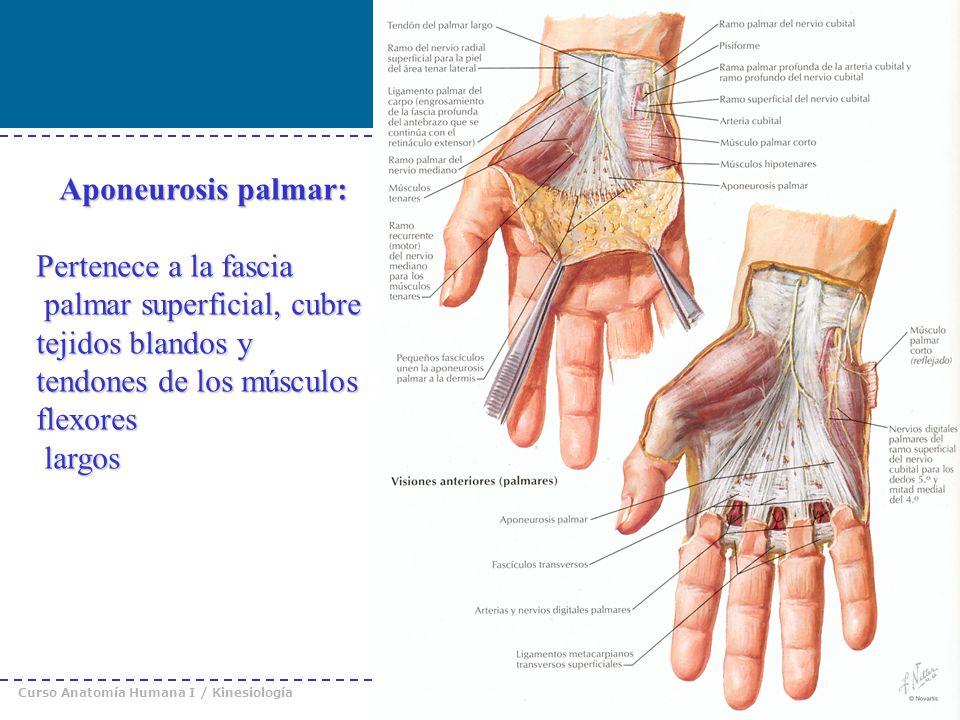 Dorable Muñeca Imágenes De Anatomía Patrón - Anatomía de Las ...