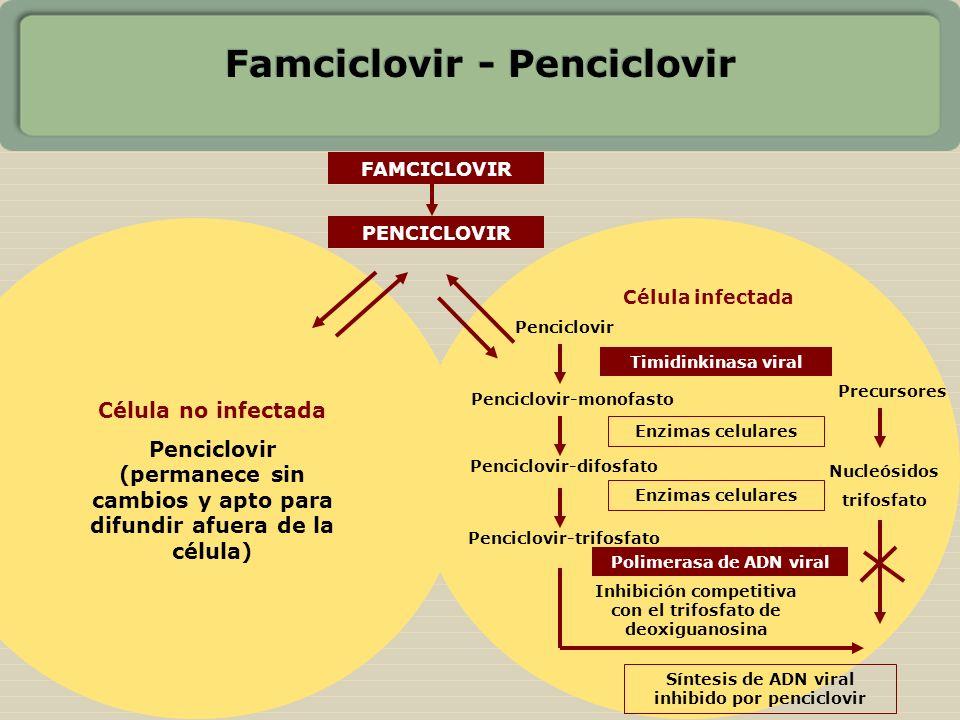 Famciclovir - Penciclovir
