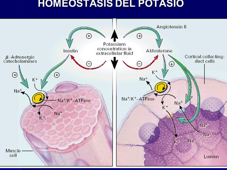 HOMEOSTASIS DEL POTASIO