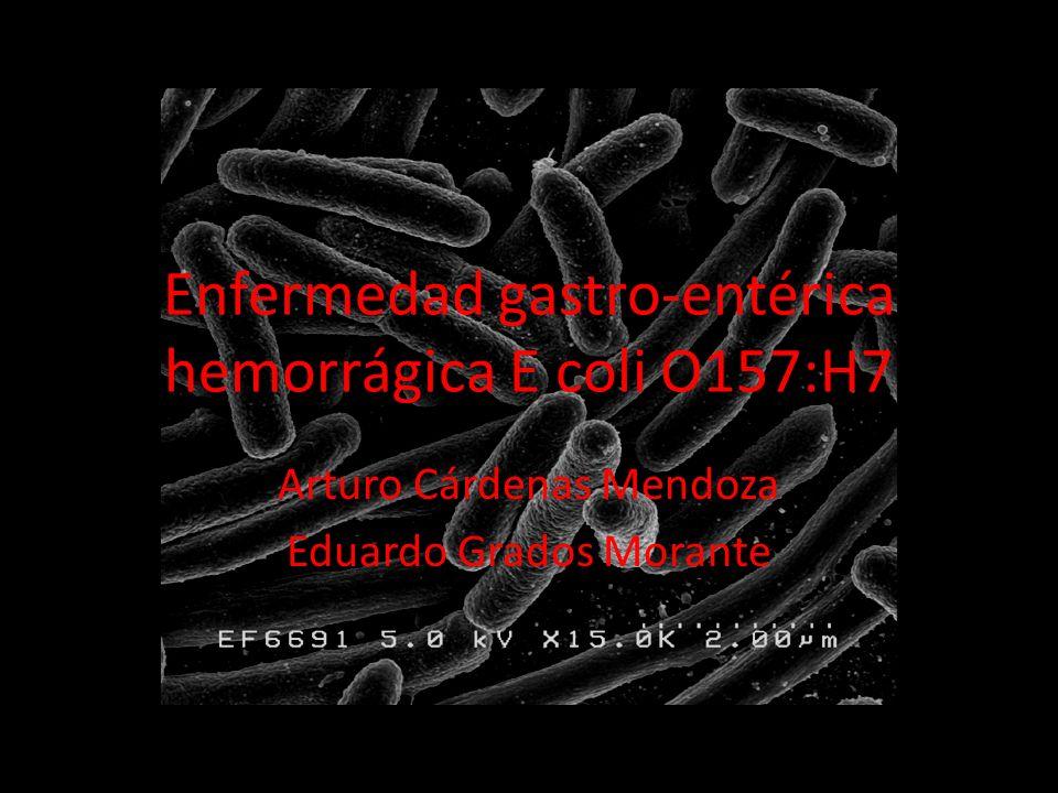 Enfermedad gastro-entérica hemorrágica E coli O157:H7