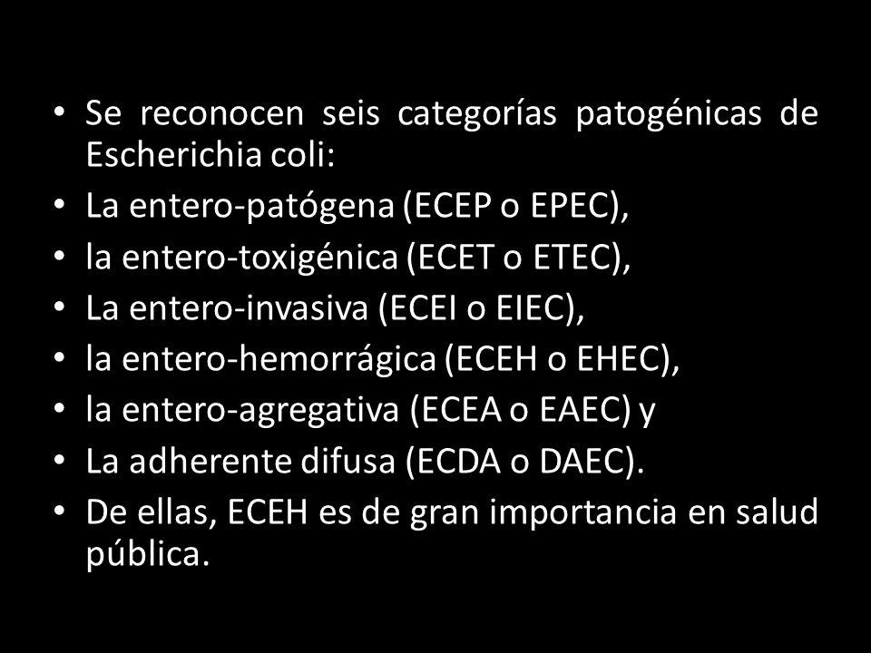 Se reconocen seis categorías patogénicas de Escherichia coli: