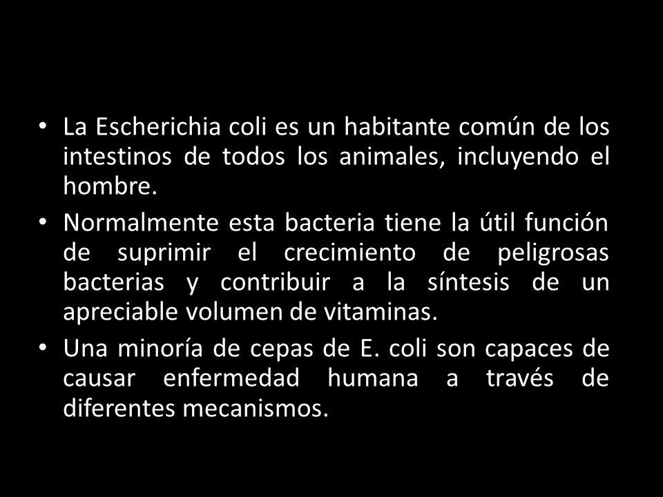 La Escherichia coli es un habitante común de los intestinos de todos los animales, incluyendo el hombre.