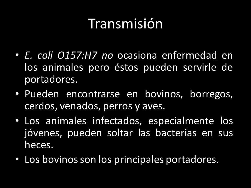 Transmisión E. coli O157:H7 no ocasiona enfermedad en los animales pero éstos pueden servirle de portadores.