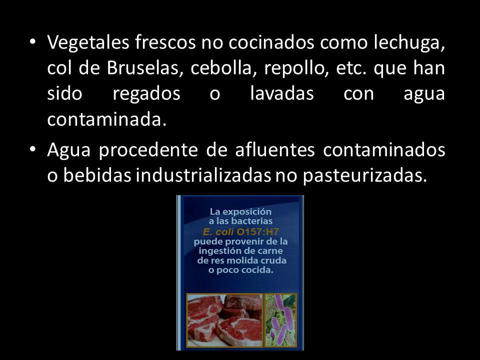 Vegetales frescos no cocinados como lechuga, col de Bruselas, cebolla, repollo, etc. que han sido regados o lavadas con agua contaminada.