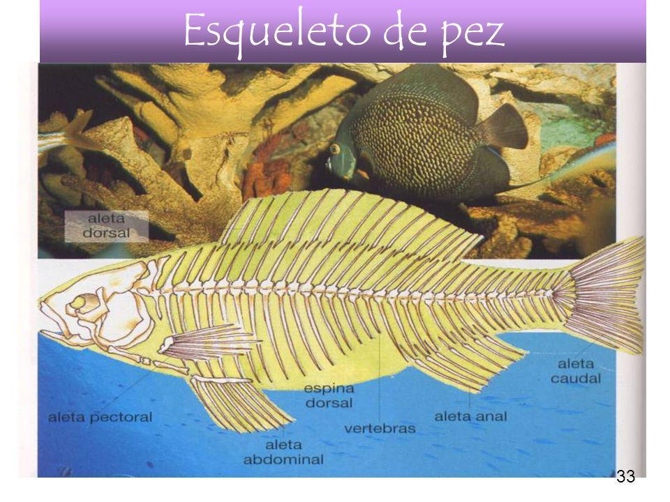Esqueleto de pez 33
