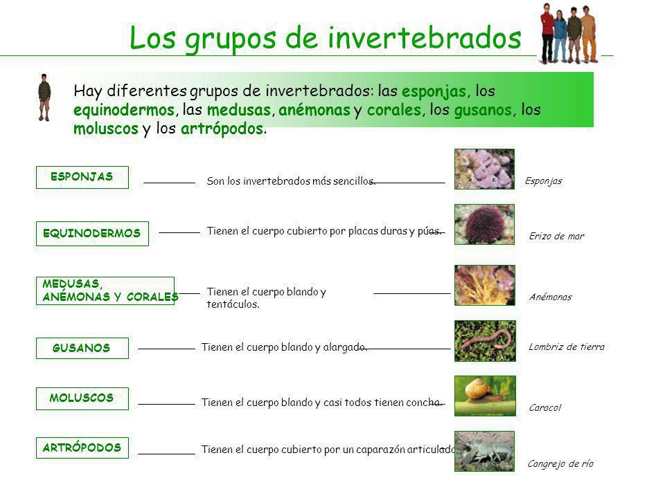 Los grupos de invertebrados