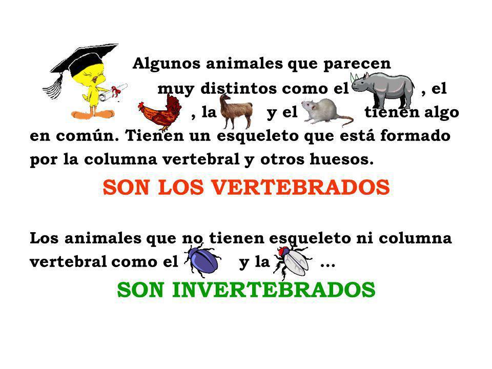 SON LOS VERTEBRADOS SON INVERTEBRADOS