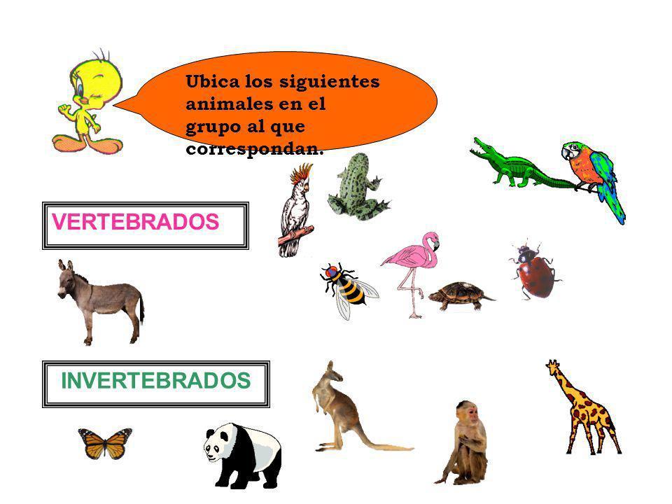 VERTEBRADOS INVERTEBRADOS
