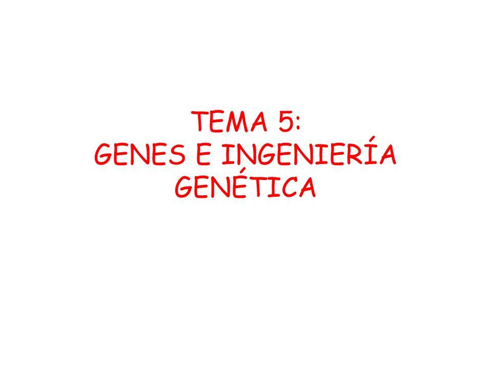 TEMA 5: GENES E INGENIERÍA GENÉTICA