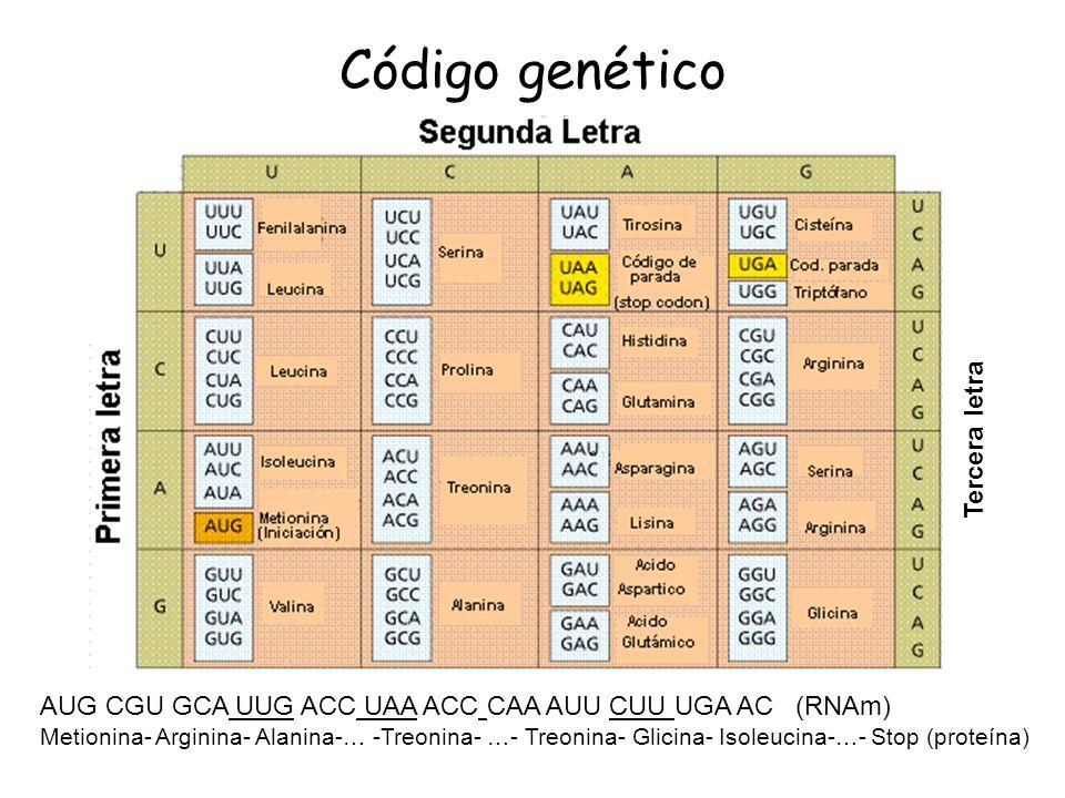 Código genético Tercera letra