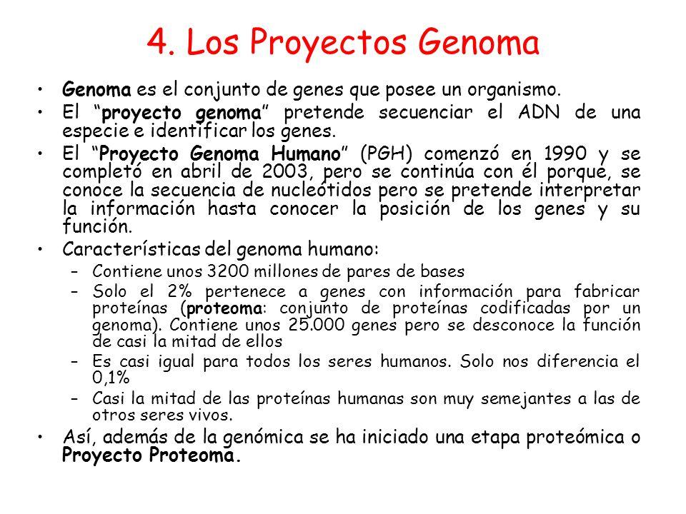 4. Los Proyectos Genoma Genoma es el conjunto de genes que posee un organismo.