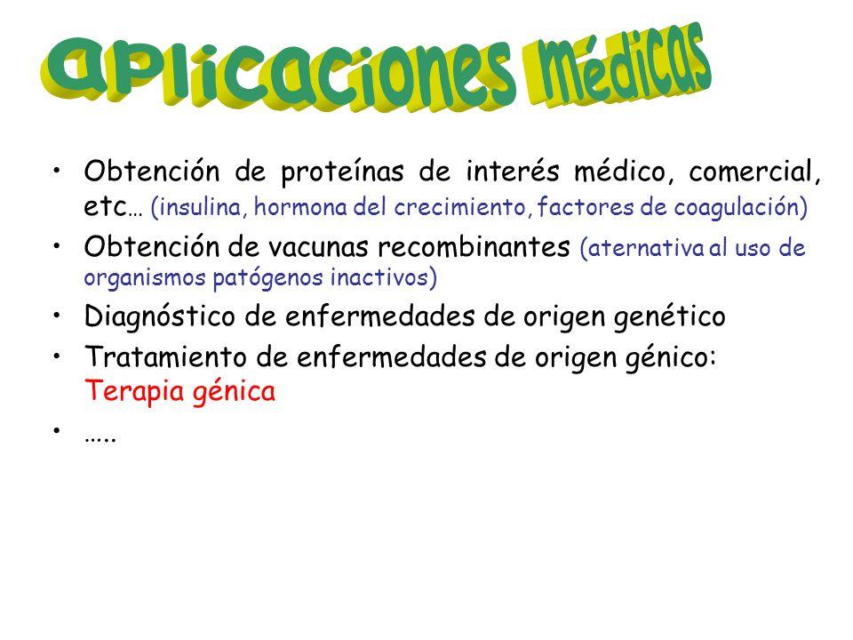 aplicaciones médicas Obtención de proteínas de interés médico, comercial, etc… (insulina, hormona del crecimiento, factores de coagulación)