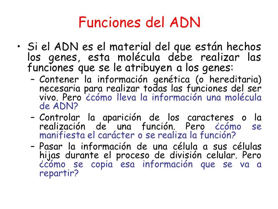 Funciones del ADN Si el ADN es el material del que están hechos los genes, esta molécula debe realizar las funciones que se le atribuyen a los genes: