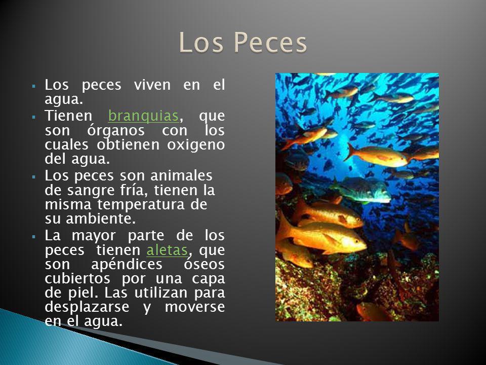 Los Peces Los peces viven en el agua.