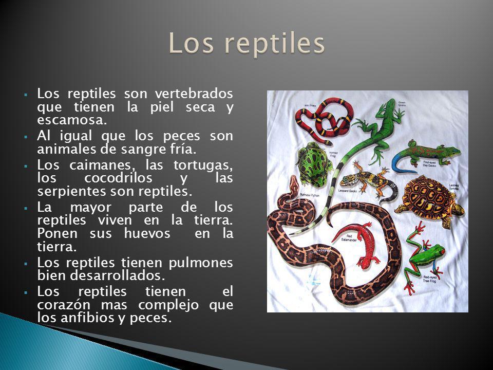 Los reptiles Los reptiles son vertebrados que tienen la piel seca y escamosa. Al igual que los peces son animales de sangre fría.