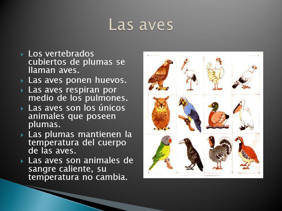 Las aves Los vertebrados cubiertos de plumas se llaman aves.
