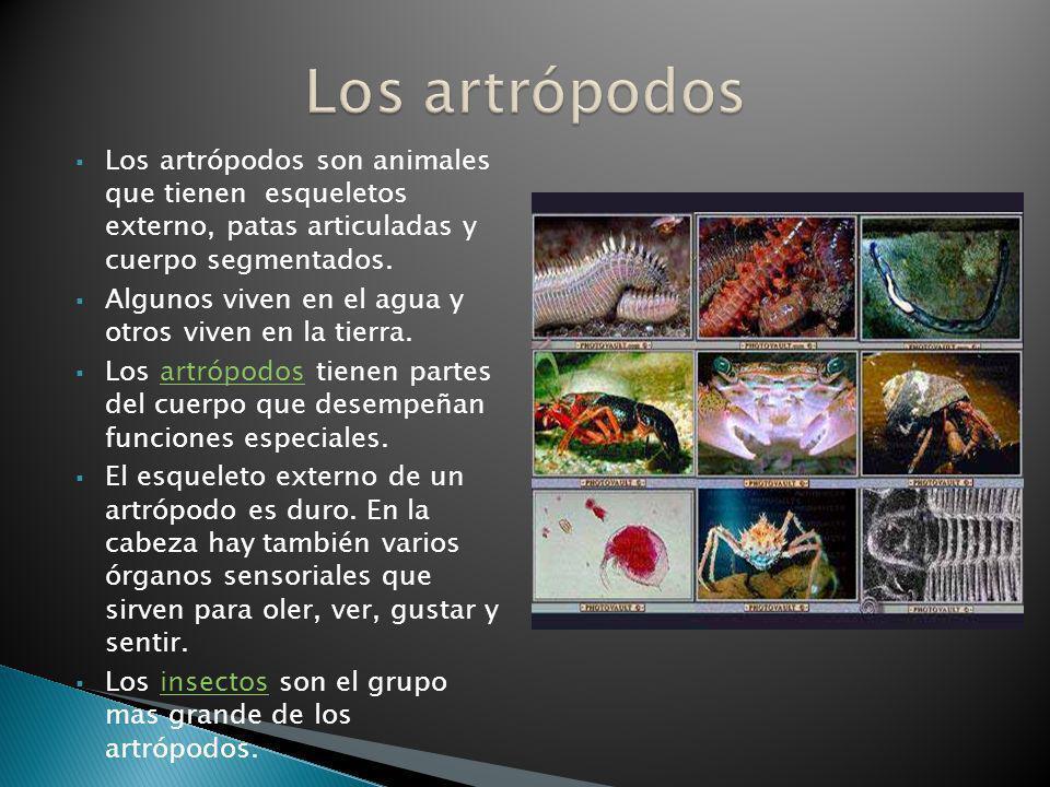 Los artrópodos Los artrópodos son animales que tienen esqueletos externo, patas articuladas y cuerpo segmentados.