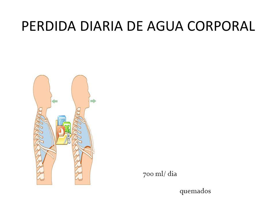 PERDIDA DIARIA DE AGUA CORPORAL