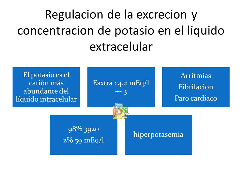 Regulacion de la excrecion y concentracion de potasio en el liquido extracelular