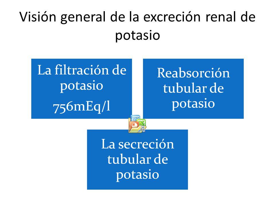 Visión general de la excreción renal de potasio