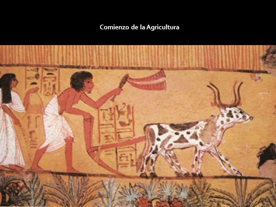 Comienzo de la Agricultura