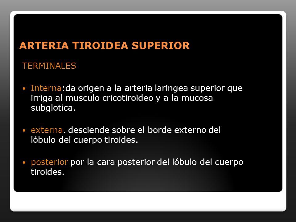 ARTERIA TIROIDEA SUPERIOR
