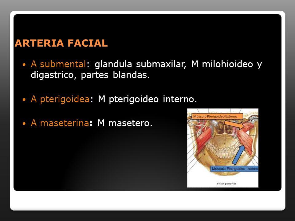 ARTERIA FACIAL A submental: glandula submaxilar, M milohioideo y digastrico, partes blandas. A pterigoidea: M pterigoideo interno.