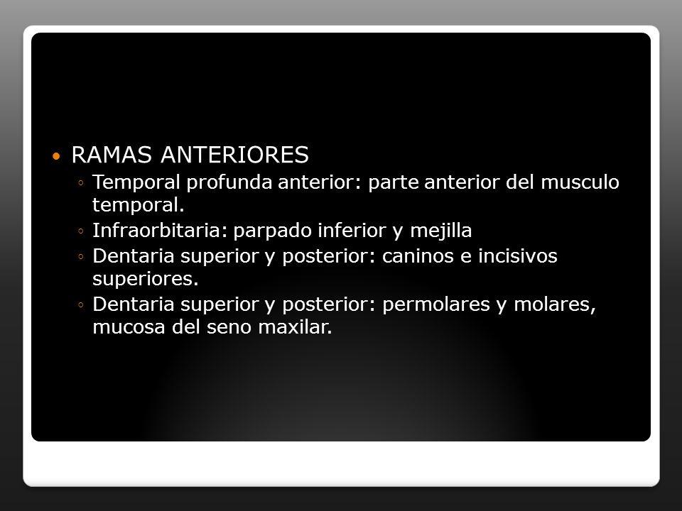 RAMAS ANTERIORES Temporal profunda anterior: parte anterior del musculo temporal. Infraorbitaria: parpado inferior y mejilla.