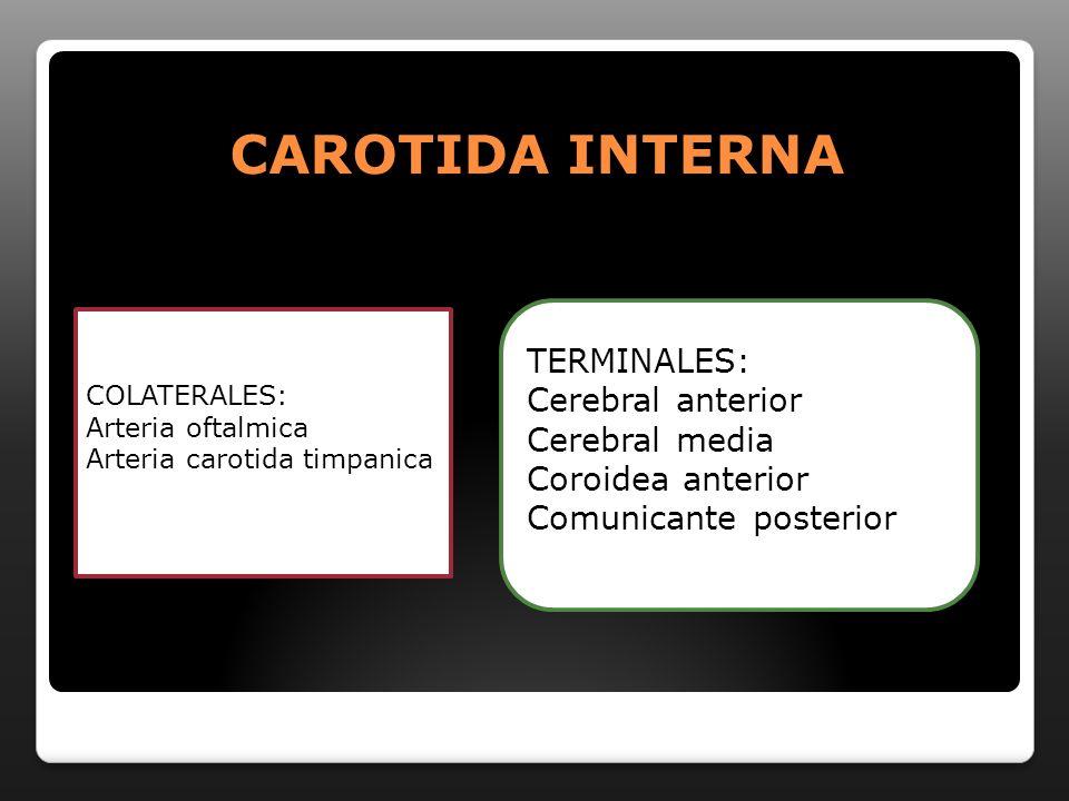 CAROTIDA INTERNA TERMINALES: Cerebral anterior Cerebral media
