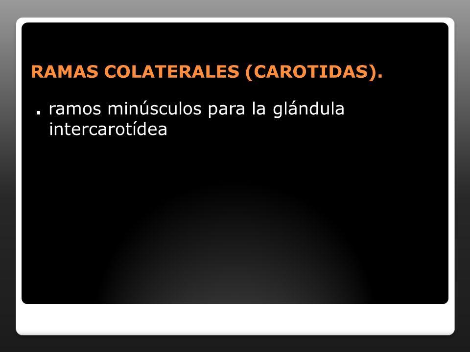 RAMAS COLATERALES (CAROTIDAS).