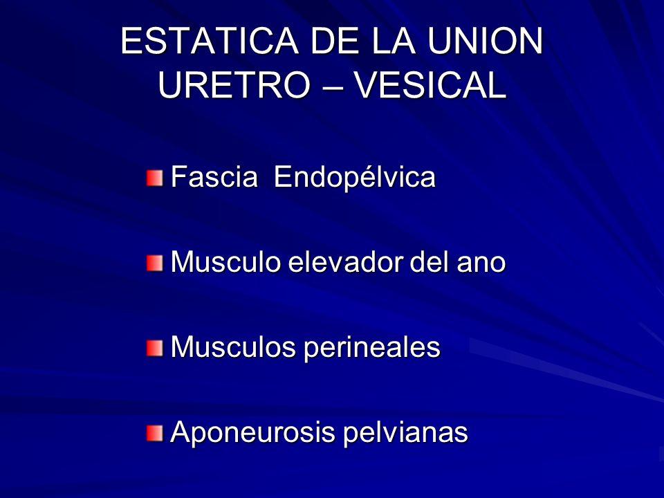 ESTATICA DE LA UNION URETRO – VESICAL