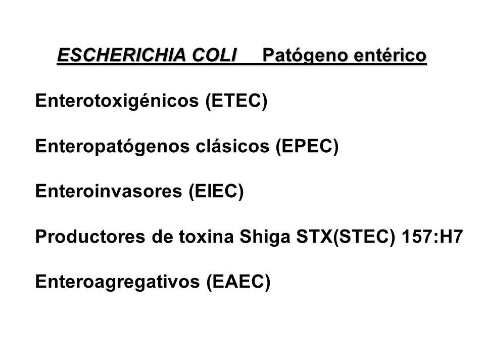 Enterotoxigénicos (ETEC) Enteropatógenos clásicos (EPEC)