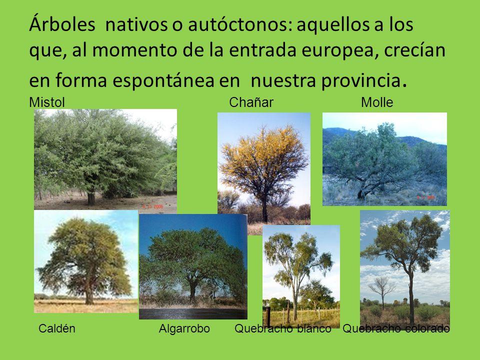 Nuestro rbol nativo el algarrobo ppt descargar for Arboles con sus nombres y caracteristicas
