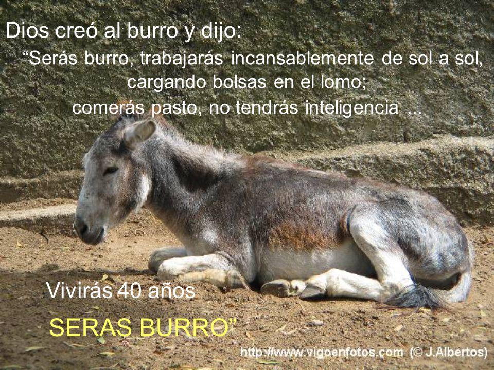 SERAS BURRO Dios creó al burro y dijo: