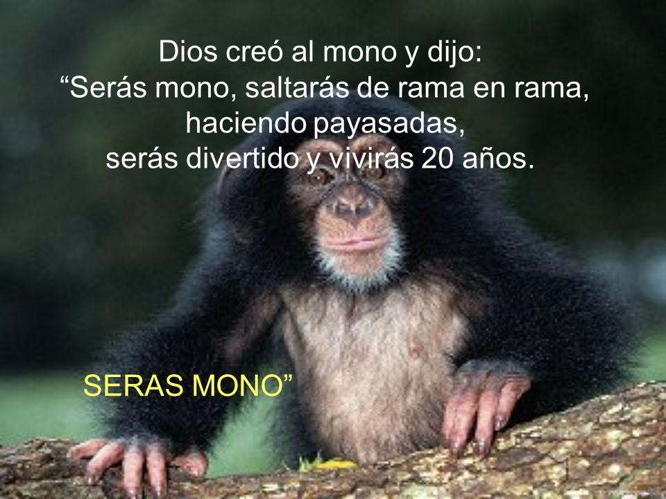 Dios creó al mono y dijo: Serás mono, saltarás de rama en rama,