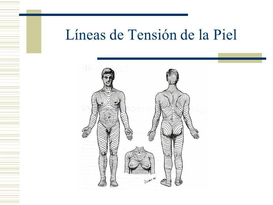 Líneas de Tensión de la Piel