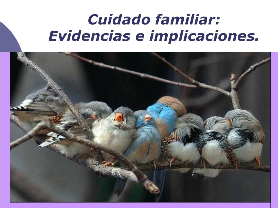 Cuidado familiar: Evidencias e implicaciones.