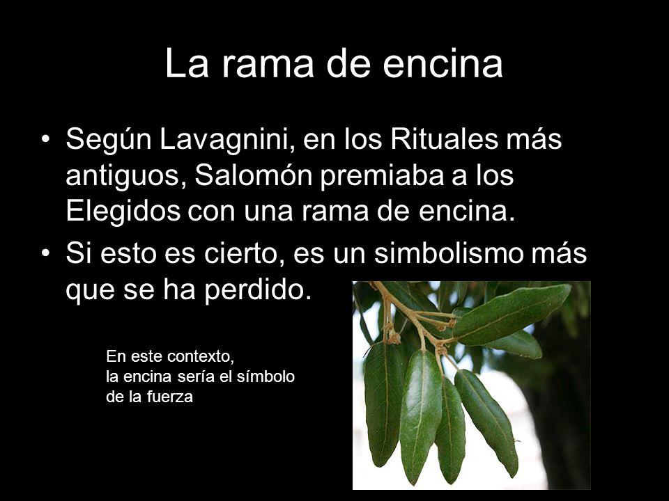 La rama de encina Según Lavagnini, en los Rituales más antiguos, Salomón premiaba a los Elegidos con una rama de encina.