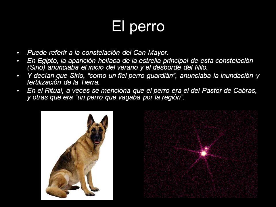 El perro Puede referir a la constelación del Can Mayor.