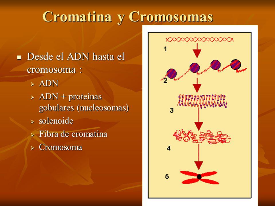 Cromatina y Cromosomas