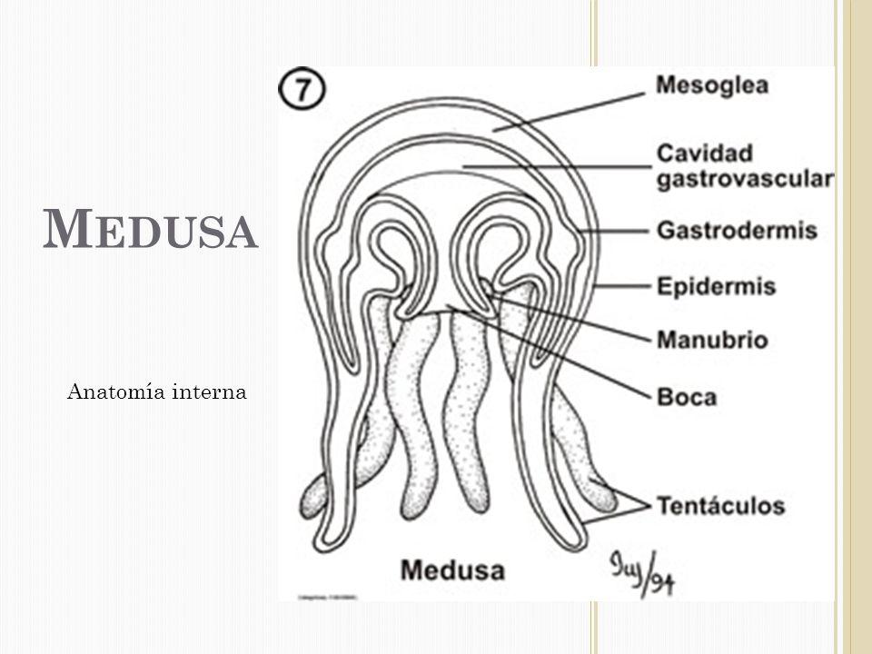 Encantador Anatomía Interna Camarones Modelo - Anatomía de Las ...